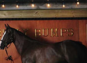 Sky stunt sees horse hooked up with 52-inch HDTV - photo 2