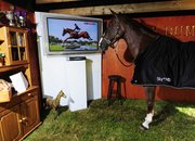 Sky stunt sees horse hooked up with 52-inch HDTV - photo 3