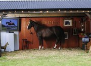 Sky stunt sees horse hooked up with 52-inch HDTV - photo 4