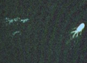 Google Earth finds Loch Ness monster - photo 1