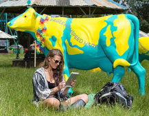 Going to Glastonbury and want free Wi-Fi? Just plonk yourself next to a cow