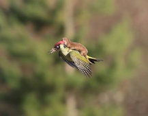 WeaselPecker: Why the internet is a mad, mad place (gallery)