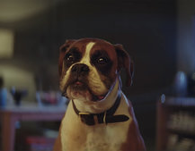 John Lewis Christmas adverts over the years: Including amazing 2016 #BusterTheBoxer commercial