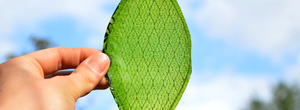 Man-made leaf could make space travel and off-world colonisation possible