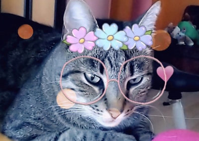 The purfect selfie: Snapchat's filters now work on cats