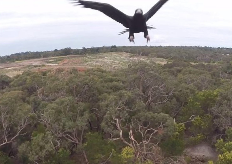 Best drone takedown videos: Eagle attack, shotgun blast, fisherman hook and more