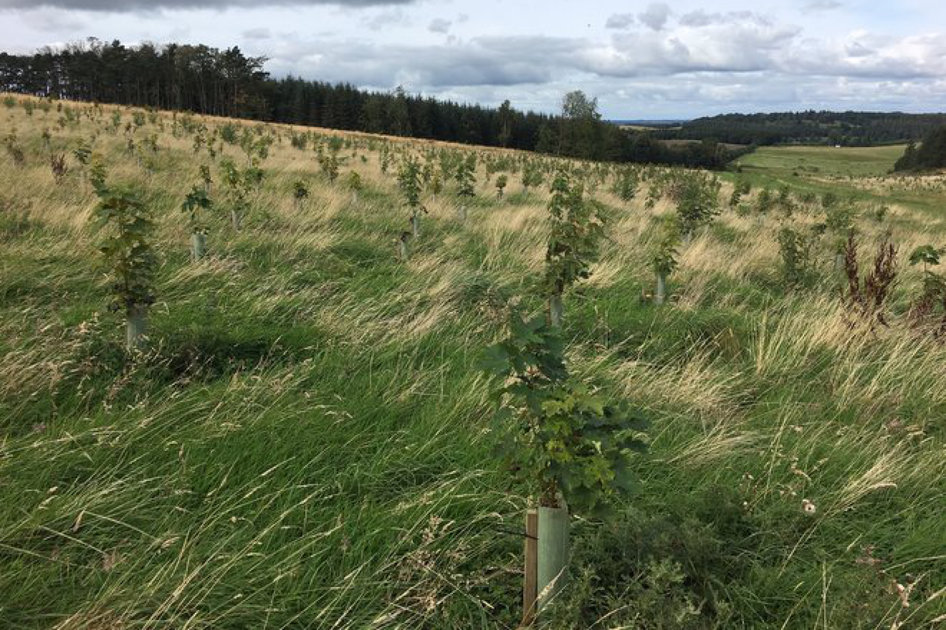Pocket-lint has planted 1,000 trees: Welcome to sustainability month