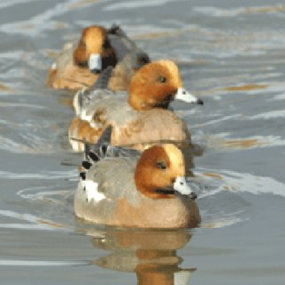 Nikon launches competition with Wildfowl and Wetlands Trust