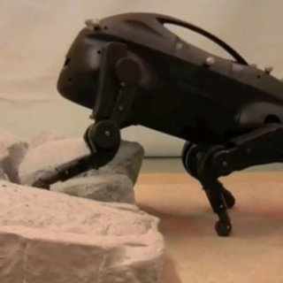 VIDEO: Brilliant but freaky robot dog