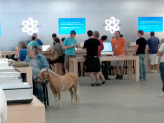 Picture caption: Horse goes into an Apple store...