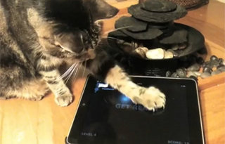 VIDEO: Cats playing games on an iPad - what more do you want?