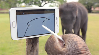 Samsung Galaxy Note: So big an elephant can use it (video)