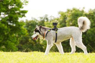 Sony HDR-AS15 now offers a dog's-eye view