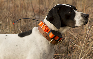 Garmin Astro DC 50 dog collar launches with bark detection and more robust GPS, battery life