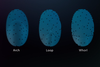 apple s touch id fingerprint sensor explained here s what you need to know image 7