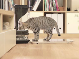 Bistro smart feeder can recognise your cat's face and monitor eating habits