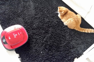 Pets riding robot vacuums