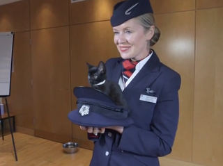 Want to watch cute cat videos? Just fly with British Airways