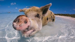The Best Gopro Photos In The World Prepare To Lose Your Breath image 141