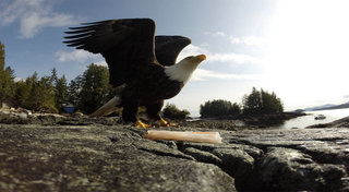 the best gopro photos in the world prepare to lose your breath image 107