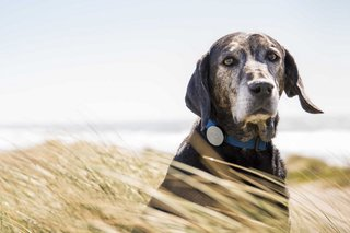 Incredible high-tech gadgets for your pets (and yourself)