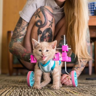 Best 3d Prints The Crazy And Coolest Things People Have Printed image 13
