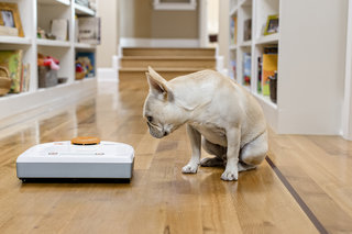 WIN: A Neato robot vacuum cleaner worth £450 to help keep your house clean this Christmas