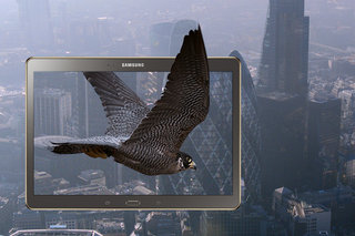 WIN: A Samsung Galaxy Tab S and an exclusive falconry experience