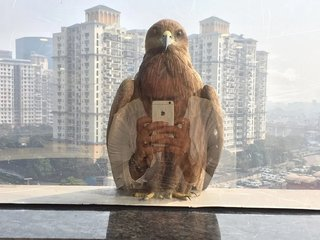 Well-timed and accidental phone pictures that will make you look twice image 89