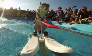 Is there anything better than GoPro footage of a waterskiing squirrel?