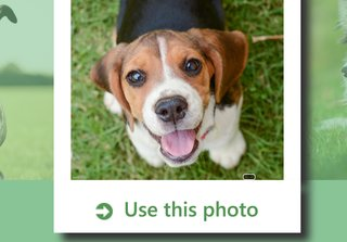 Can't tell if you own a beagle or a mutt? There's a Microsoft app for that