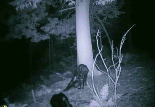 Unexplained mysteries and paranormal events image 24