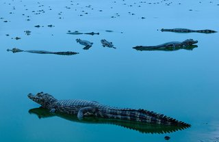 Stunning photos from The Nature Conservancy 2018 global photo contest image 7
