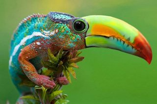Bonkers new animals imagined with the power of Photoshop image 15