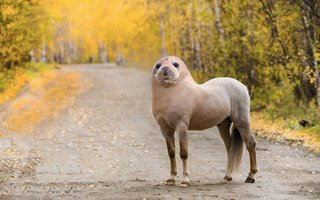Bonkers new animals imagined with the power of Photoshop image 23