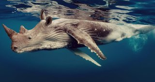 Bonkers new animals imagined with the power of Photoshop image 28