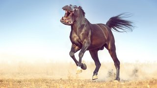 Bonkers new animals imagined with the power of Photoshop image 29