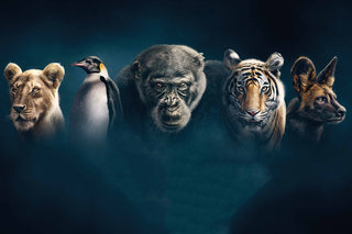 Dynasties is latest series in 4K HDR on BBC iPlayer