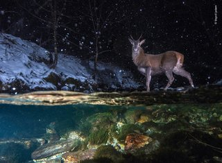 Incredible Images From The Wildlife Photographer Of The Year Competition image 27