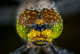 The best-ever macro photography design 9