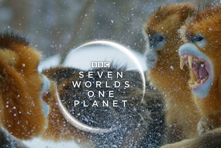 Seven Worlds One Planet: Release date, trailers, and everything you need to know