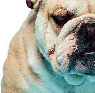 Bulldog opts for Pay-as-you-go adsl service