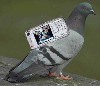 Pigeons equipped with mobile phones head for the skies