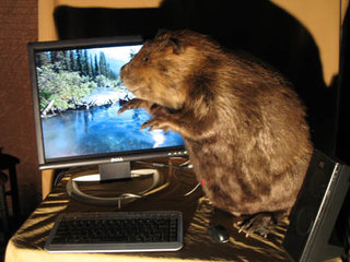 Computers for animal lovers - the beaver
