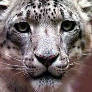 Snow Leopard to borrow features from iPhone