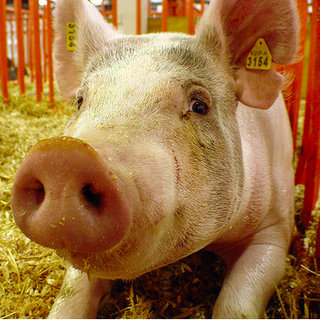 Swine Flu? Yep there is an app for that