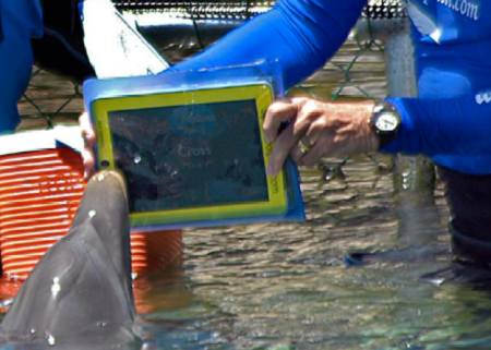 Even dolphins want an iPad
