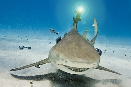 Shark has a laser beam attached to its fin