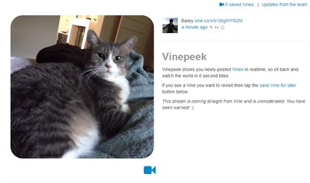 What is Vine? - photo 3