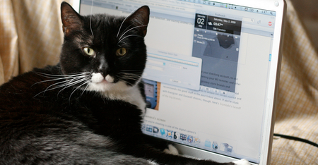 Dell responds after customers claim laptop smells like 'cat urine'